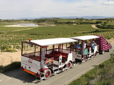 Train among the vineyards
